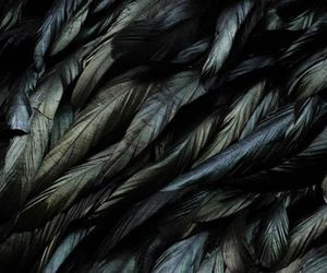 feather, bird, and black image