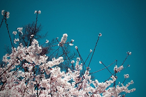 blue, branches, and pink image