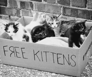 kittens and cute image