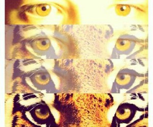 eyes, tiger, and brown image