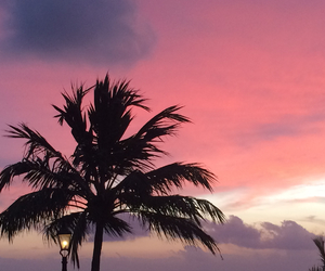 beautiful, nice, and palmtree image