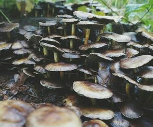autumn, fall, and mushrooms image