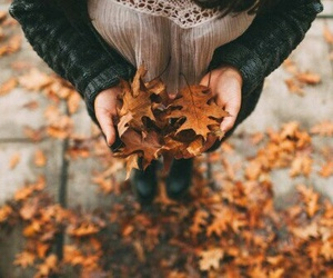 leaves and autumn image