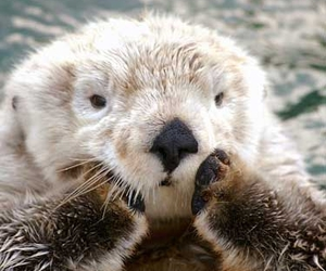 grooming, otter, and paws image