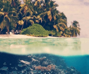 beach, beautiful place, and palms image