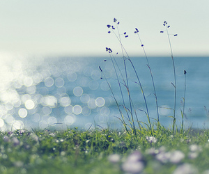 sea, flowers, and summer image