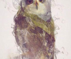 art, awesome, and owl image