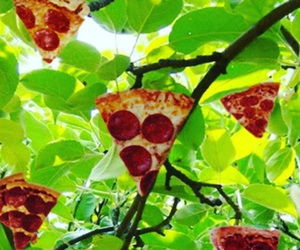 pizza, tree, and food image