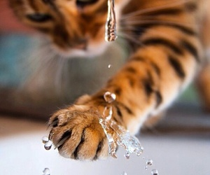 cat, orange, and water image