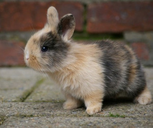 rabbit, cute, and bunny image