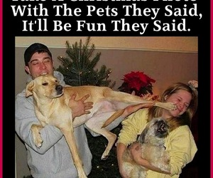 funny, funny pictures, and dog lovers image