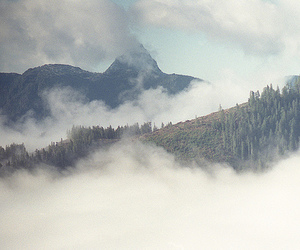 fog, forest, and mountains image