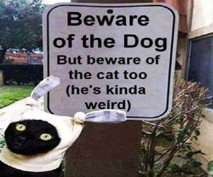 beware, cat, and funny image