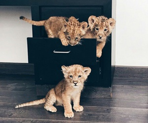 baby, lion, and funny image