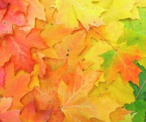 autumn, leaves, and colorful image