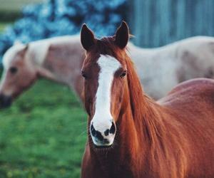 horse, horses, and природа image