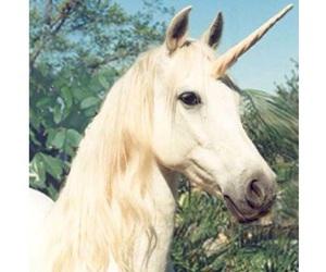 unicorn and white image