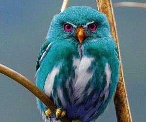 bird and owl image