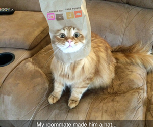 cat, funny, and roomate image