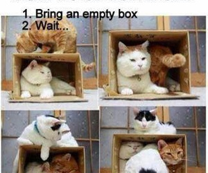 cat, funny, and box image