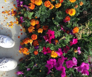 aesthetic, flowers, and natural image
