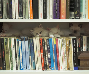 books, shelf, and cats image