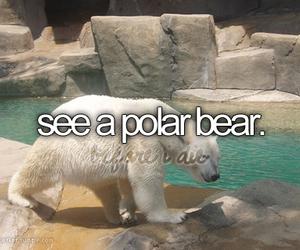 bear, Polar Bear, and before i die image