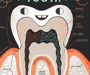 dentist, tooth, and dentistry image