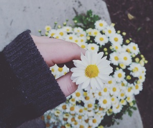 daisy, flowers, and goals image