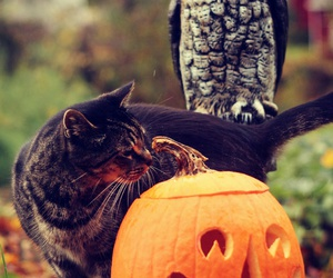 cat, Halloween, and owl image
