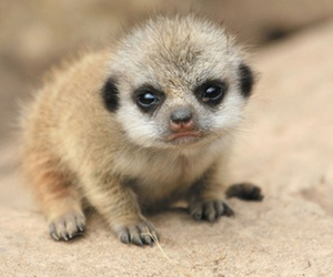 animal, baby, and cute animals image