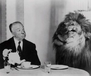 lion, alfred hitchcock, and black and white image
