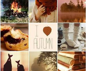 autumn and brown image