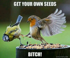 funny, bird, and quote image