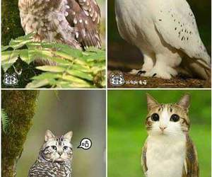 cat, cats, and eye image