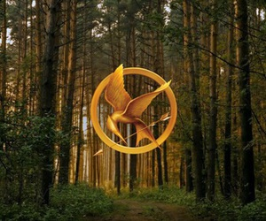 Jennifer Lawrence, the hunger games, and woods image