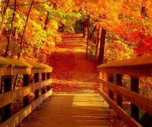 autumn, colourful, and staircase image