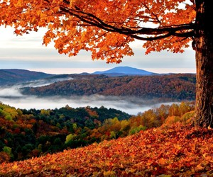 autumn, colourful, and beautiful place image