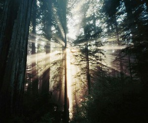 sun, forest, and light image