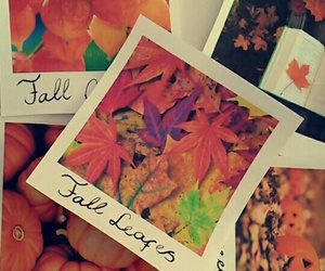 autumn, diy, and fall image