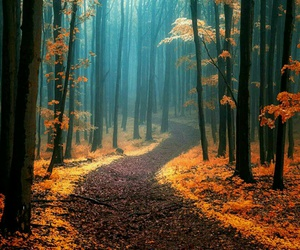 autumn, enchanted, and path image