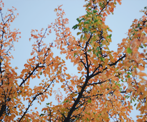 autumn, cold, and fall image
