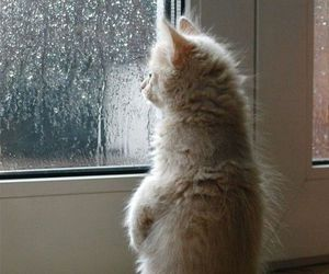 cat, rain, and cute image