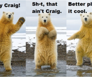 bear, cool, and funny image