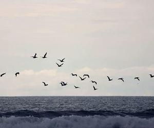 bird, sea, and beautiful image