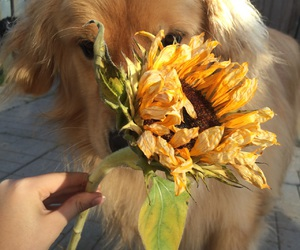 dog, sunflower, and aesthetic image