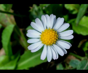 daisy and natural image