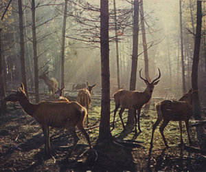 deer, forest, and trees image