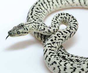 python and snake image