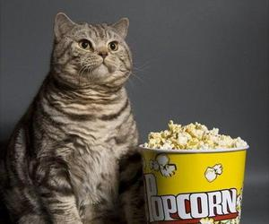cat, popcorn, and funny image